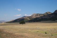 Árbol solitario Dobrogea de las montañas de Macin Imagenes de archivo