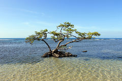 Árbol solitario en agua salada baja imagenes de archivo