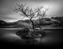 Árbol solitario en blanco y negro, agua de Rydal, distrito del lago, Cumbri imagen de archivo libre de regalías