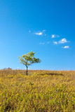 Árbol solitario en campo Imagenes de archivo