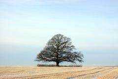 Árbol solitario en campo Imágenes de archivo libres de regalías