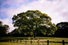 Árbol solitario en campo Imagen de archivo libre de regalías