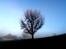 Árbol solitario en campo brumoso Imagen de archivo libre de regalías