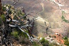 Árbol solitario en el borde de la barranca Fotografía de archivo libre de regalías
