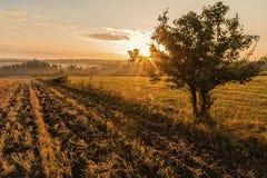 Árbol solitario en el campo de niebla en salida del sol de oro Foto de archivo libre de regalías