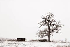 Árbol solitario en el campo Nevado Imágenes de archivo libres de regalías