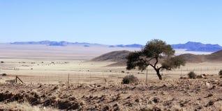 Árbol solitario en el desierto duro imagenes de archivo