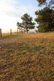 Árbol solitario en el extremo de un campo foto de archivo