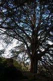 Árbol solitario en el jardín del castillo de la lisonja en Irlanda Imágenes de archivo libres de regalías