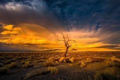 Árbol solitario en el lago pyramid de la puesta del sol imagenes de archivo