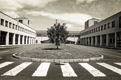Árbol solitario en el medio de la construcción moderna Imagenes de archivo
