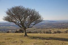 Árbol solitario en el parque nacional de Dartmoor Fotografía de archivo libre de regalías