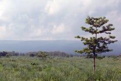 Árbol solitario en el prado, parque nacional de Chitwan Fotos de archivo libres de regalías