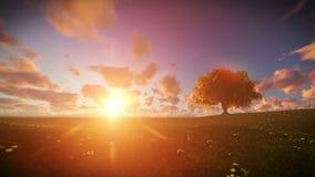 Árbol solitario en el prado verde, salida del sol del lapso de tiempo almacen de video