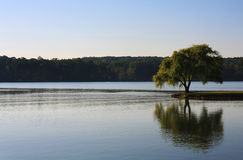 Árbol solitario en el río Imágenes de archivo libres de regalías