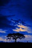 Árbol solitario en la medianoche Foto de archivo libre de regalías