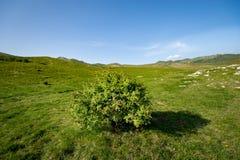 Árbol solitario en la meseta herbosa extensa rodeada por las colinas verdes fotos de archivo