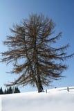 Árbol solitario en la nieve en invierno Imagen de archivo libre de regalías