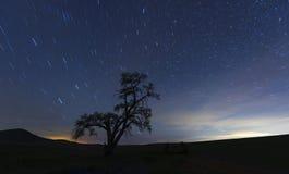 Árbol solitario en la noche imagen de archivo