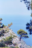 Árbol solitario en la orilla rocosa Foto de archivo libre de regalías