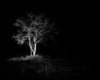 Árbol solitario en la oscuridad Imagenes de archivo