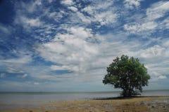 Árbol solitario en la playa Foto de archivo libre de regalías