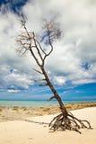 Árbol solitario en la playa tropical Fotografía de archivo