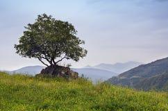 Árbol solitario en las montañas Imagenes de archivo