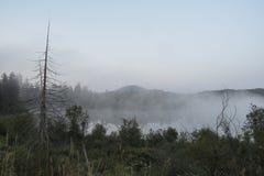 Árbol solitario en medio de la niebla de la mañana Foto de archivo libre de regalías