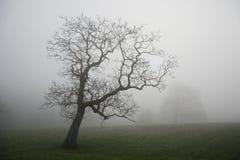 Árbol solitario en niebla de la madrugada Fotografía de archivo
