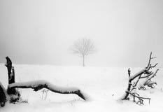 Árbol solitario en nieve de los inviernos imagenes de archivo