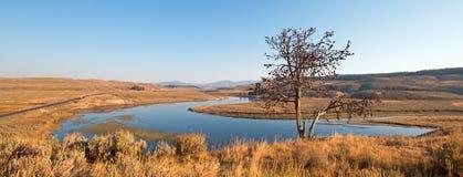 Árbol solitario en peñasco sobre el río Yellowstone en Hayden Valley en el parque nacional de Yellowstone en Wyoming Imagenes de archivo