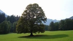 Árbol solitario en pradera Imagen de archivo