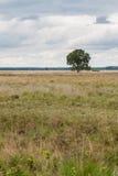 Árbol solitario en tierra imágenes de archivo libres de regalías