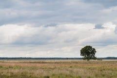 Árbol solitario en tierra imagenes de archivo