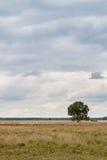 Árbol solitario en tierra fotografía de archivo libre de regalías