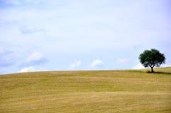 Árbol solitario en Toscana, Italia imagenes de archivo