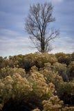 Árbol solitario en un campo fotos de archivo