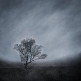 Árbol solitario en un paisaje brumoso imagenes de archivo