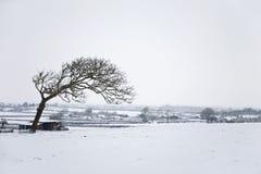 Árbol solitario en un paisaje del invierno Fotografía de archivo