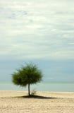 Árbol solitario en una playa Fotos de archivo libres de regalías