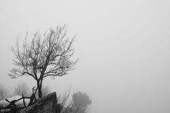Árbol solitario encima de una montaña fotografía de archivo
