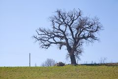 Árbol solitario espeluznante imágenes de archivo libres de regalías