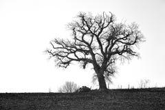 Árbol solitario espeluznante fotos de archivo libres de regalías