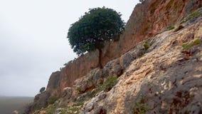 Árbol solitario que crece fuera de la ladera almacen de video