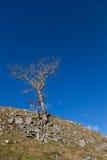 Árbol solitario que se aferra en la ladera contra un cielo azul claro Fotos de archivo libres de regalías