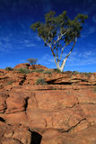 Árbol solitario - reyes Canyon Fotografía de archivo