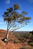 Árbol solitario - reyes Canyon Foto de archivo libre de regalías