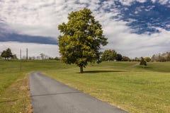 Árbol solitario y camino/calzada curvados en Virginia rural, el 26 de octubre de 2016 Imágenes de archivo libres de regalías