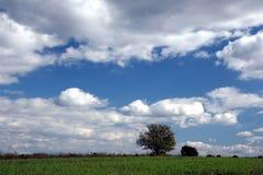 Árbol solitario y cielo extenso Imagenes de archivo